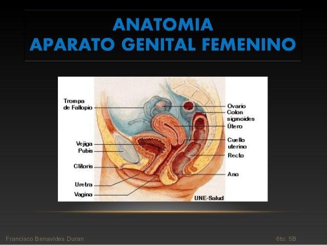 Anatomia Ginecologica