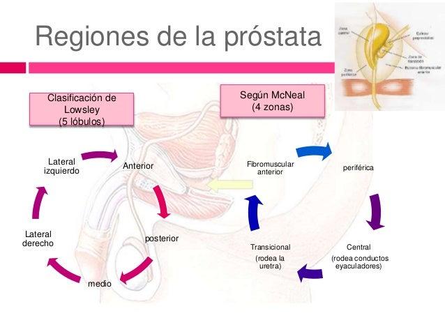 Anatomia aparatourinario_urologia