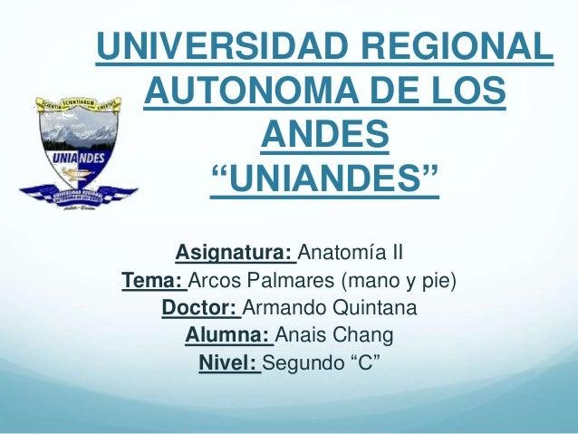 """UNIVERSIDAD REGIONAL AUTONOMA DE LOS ANDES """"UNIANDES"""" Asignatura: Anatomía II Tema: Arcos Palmares (mano y pie) Doctor: Ar..."""