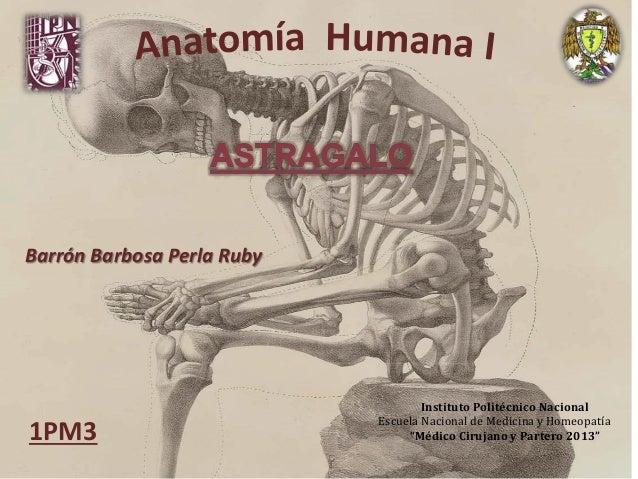 """Barrón Barbosa Perla Ruby Instituto Politécnico Nacional Escuela Nacional de Medicina y Homeopatía """"Médico Cirujano y Part..."""