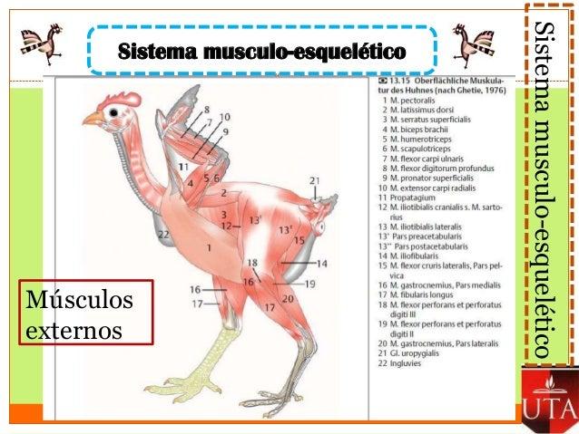Anatomia Aviar Gonzalez Ivan