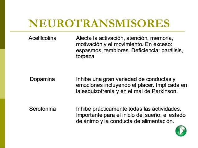 Anatomia basica cerebral neuropsicologia Psicofisiologia