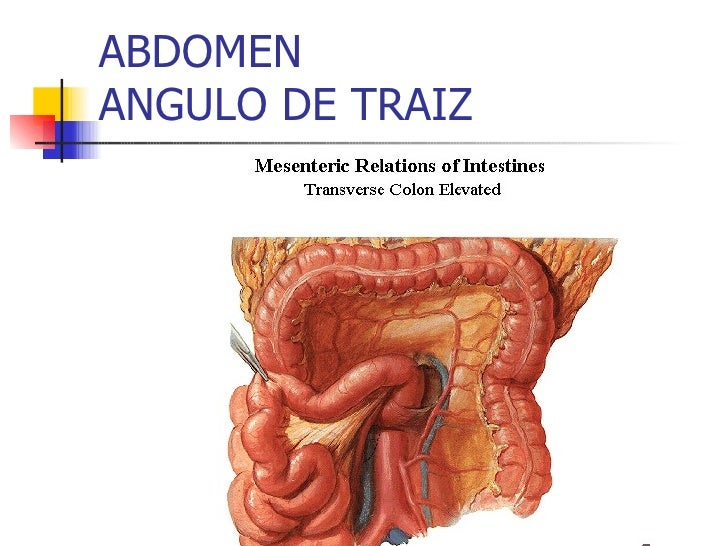 Dorable Cp ángulo Anatomía Friso - Anatomía de Las Imágenesdel ...