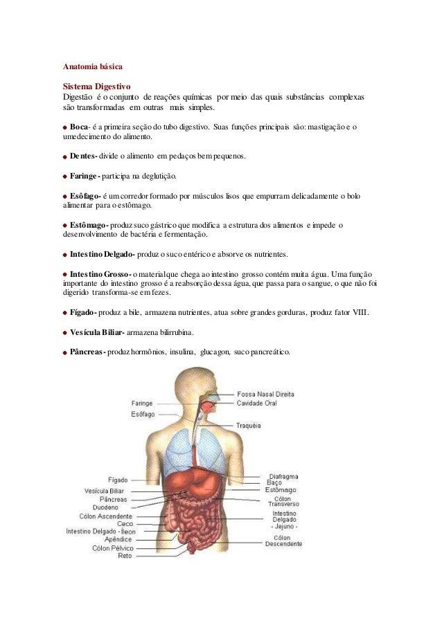 Anatomia básica Sistema Digestivo Digestão é o conjunto de reações químicas por meio das quais substâncias complexas são t...