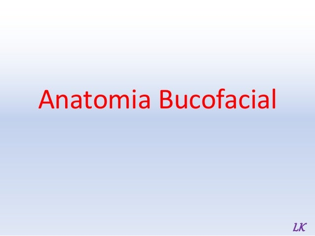 Anatomia Bucofacial LK