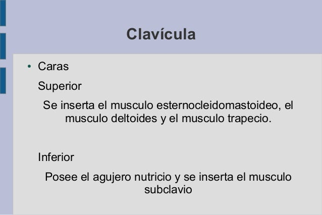 Clavícula