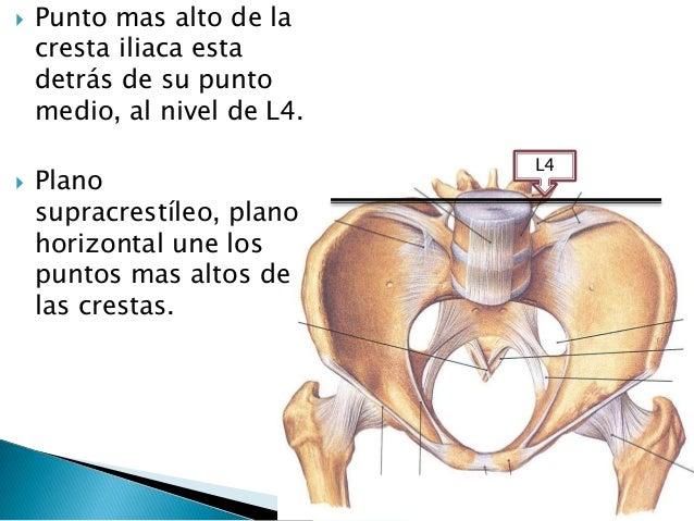 Anatomia cap18