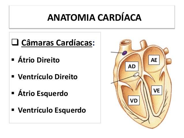 ANATOMIA CARDÍACA Câmaras Cardíacas: Átrio Direito Ventrículo Direito Átrio Esquerdo Ventrículo EsquerdoADAEVDVE