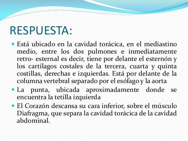 EXAMEN DE ANATOMÍA CARDIACA