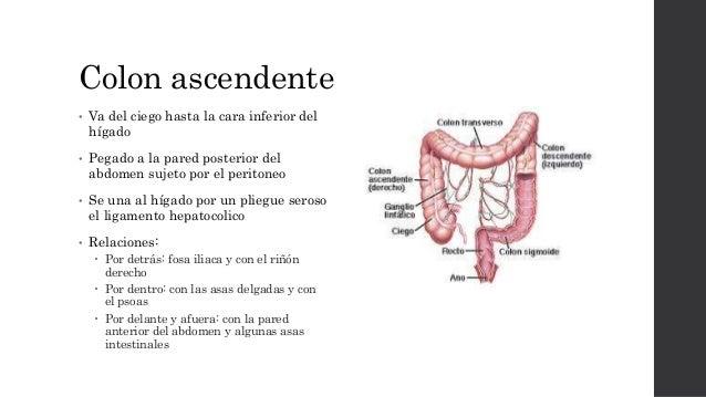 Anatomia colon. recto y ano