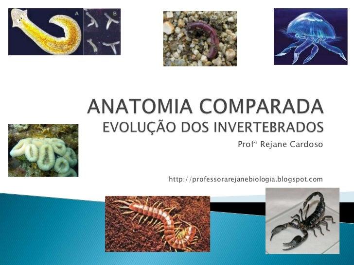 ANATOMIA COMPARADAEVOLUÇÃO DOS INVERTEBRADOS<br />ProfªRejaneCardoso<br />http://professorarejanebiologia.blogspot.com<br />