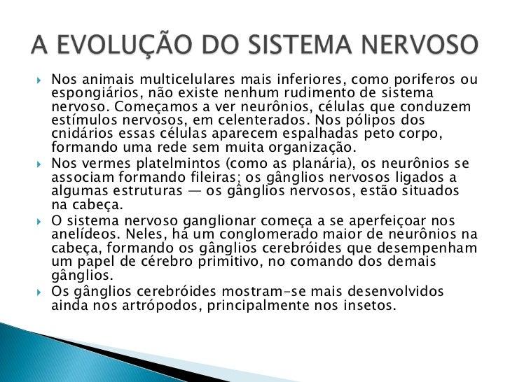 Nos animais multicelulares mais inferiores, como poriferosou espongiários, não existe nenhum rudimento de sistema nervoso....