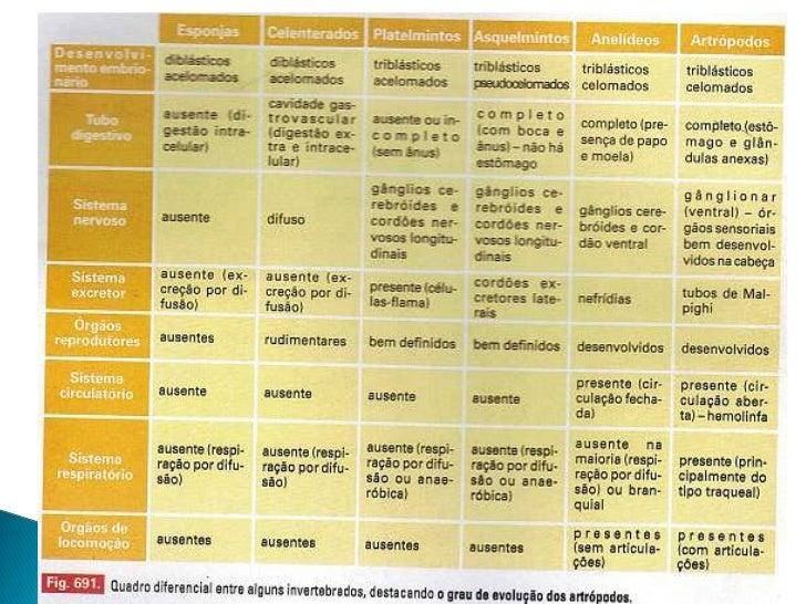 Moderno Anatomía Comparativa De Los Vertebrados Bosquejo - Anatomía ...