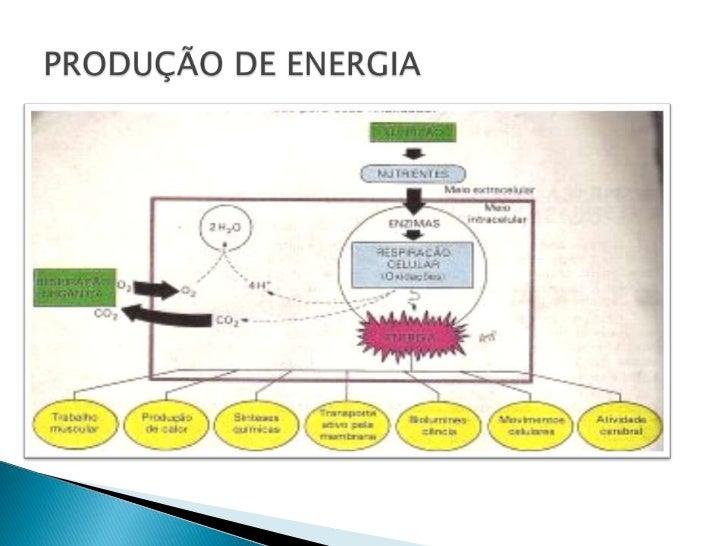 PRODUÇÃO DE ENERGIA<br />