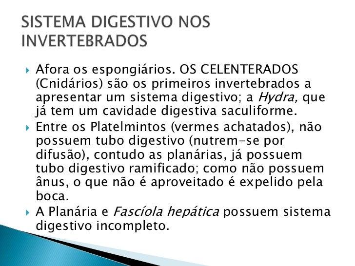Afora os espongiários. OS CELENTERADOS (Cnidários) são os primeiros invertebrados a apresentar um sistema digestivo; a Hyd...
