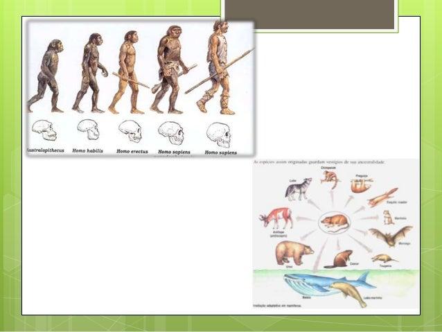 O conjunto ordenado dos órgãos homólogos em diferentes organismos constitui uma Série Filogenética. Esta pode ser:   Séri...