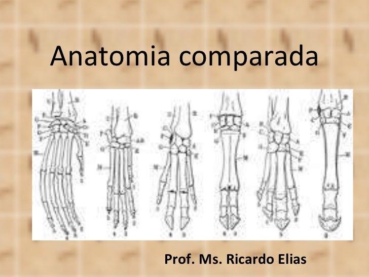 Anatomia comparada Prof. Ms. Ricardo Elias