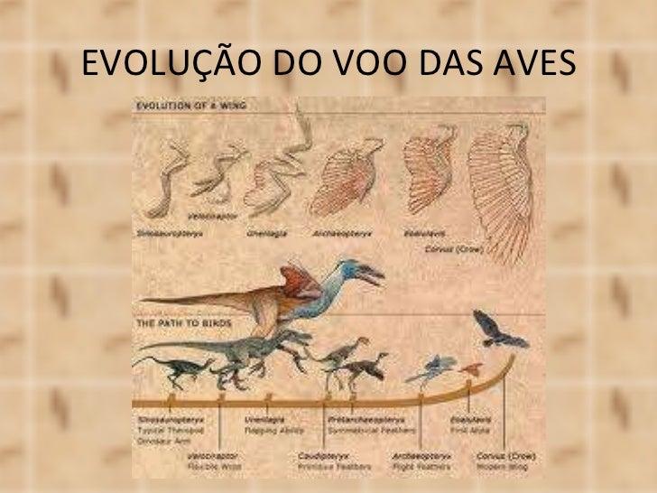 EVOLUÇÃO DO VOO DAS AVES