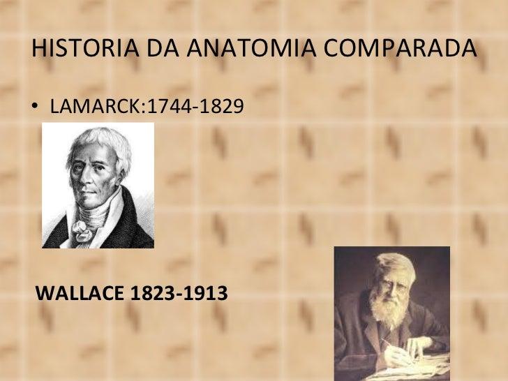 HISTORIA DA ANATOMIA COMPARADA <ul><li>LAMARCK:1744-1829 </li></ul>WALLACE 1823-1913