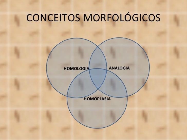 CONCEITOS MORFOLÓGICOS HOMOLOGIA ANALOGIA HOMOPLASIA
