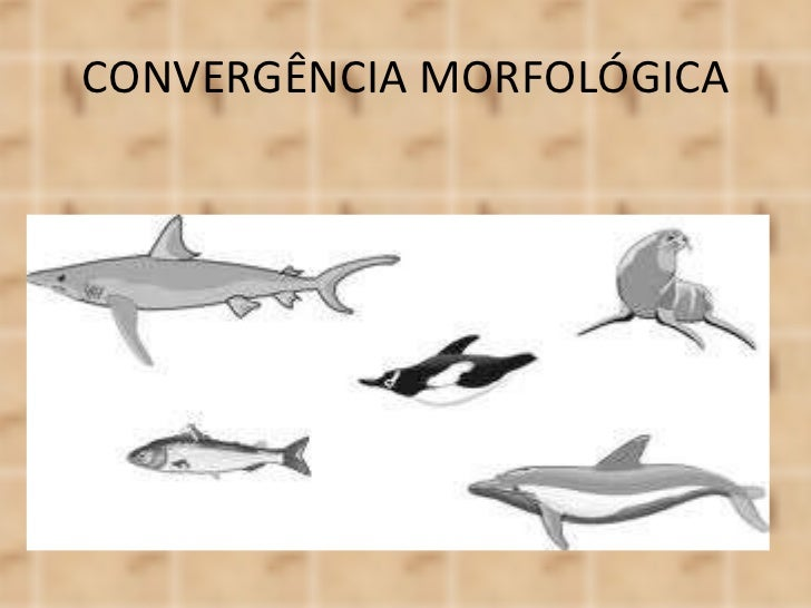 CONVERGÊNCIA MORFOLÓGICA