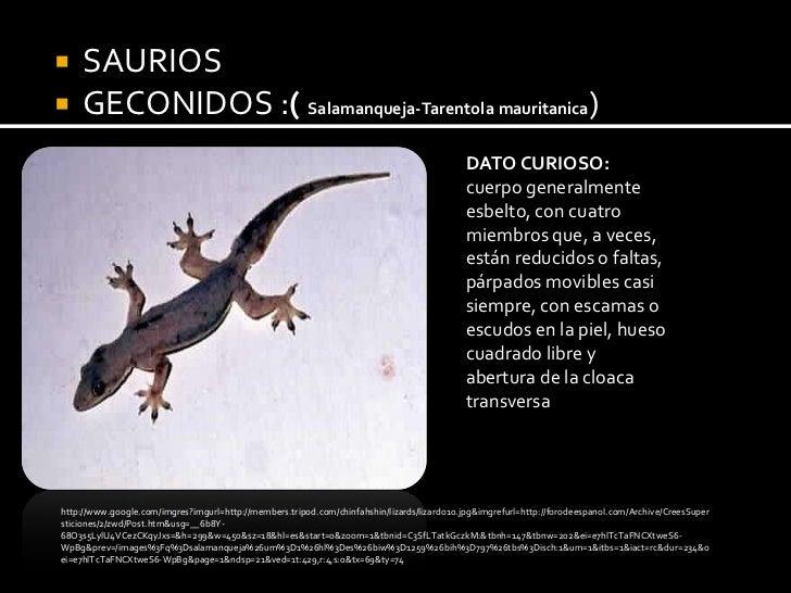 Excelente Anatomía De Un Gecko Colección - Anatomía de Las ...