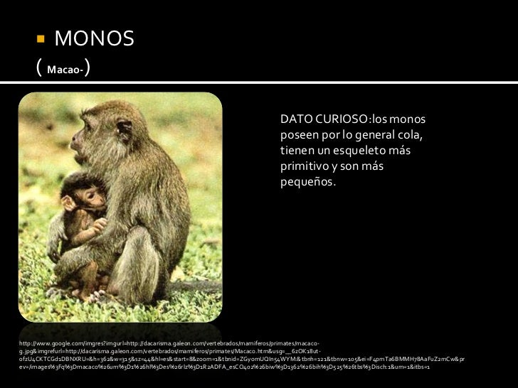 Atractivo Sea Monkey Anatomía Friso - Anatomía de Las Imágenesdel ...
