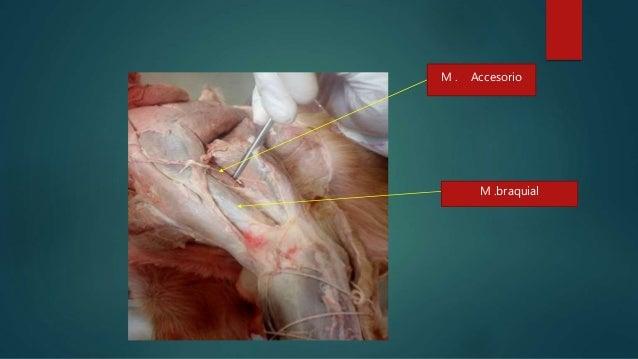 Anatomia con mi perro
