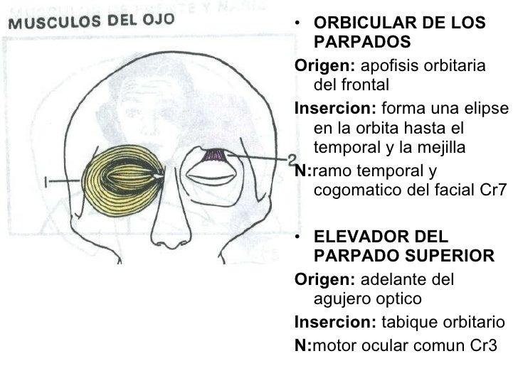 Si se hinchan los ojos después de botoksa