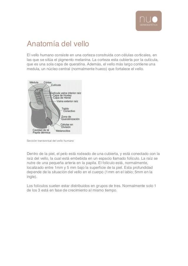 Anatomia del Vello