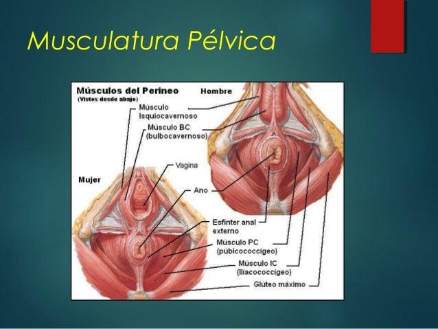 Anatomia Apendice Pdf Download