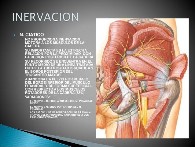 Anatomia de cadera (2)