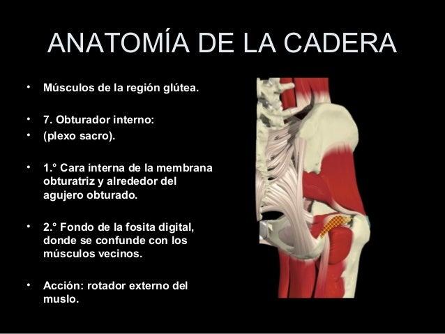 Anatomia de cadera (3)