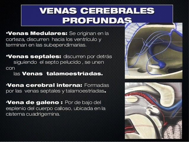 Anatomia cerebral venosa