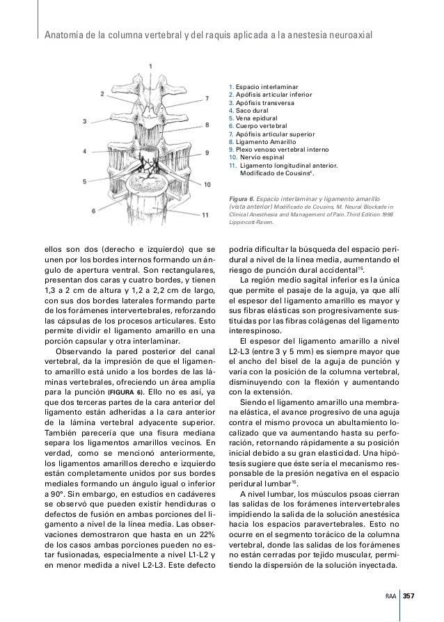Anatomia de columna aplicada a la anestesia