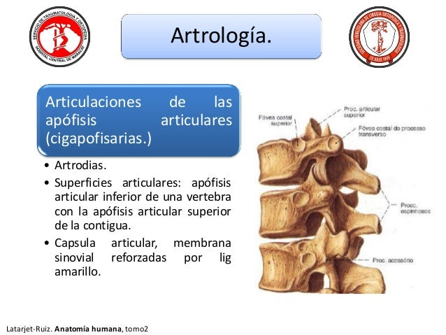 Anatomia de columna toracica