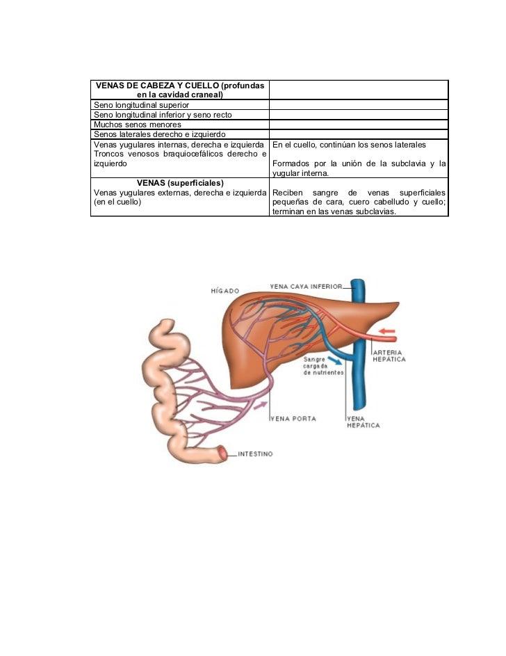 Contemporáneo Corazón Cavidad Anatomía Cresta - Imágenes de Anatomía ...