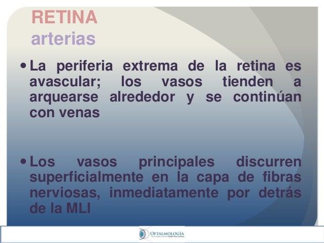 Anatomia de coroides y retina clase vesp