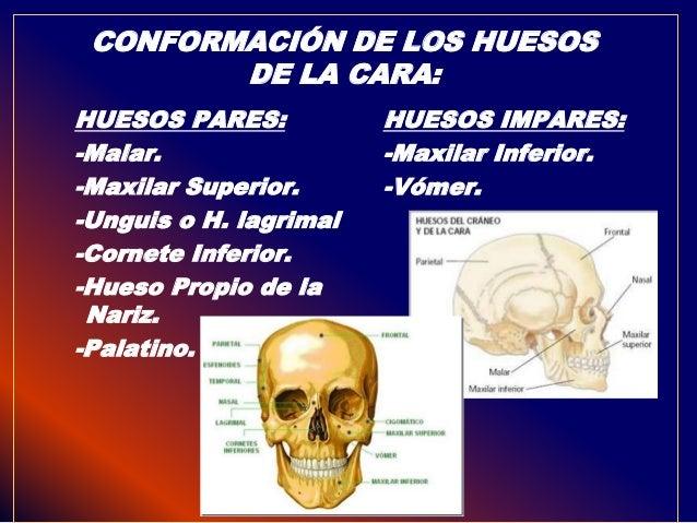 Anatomia de cranio y cara con diagnostico en rx