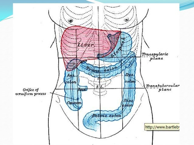 Anatomia de estomago y duodeno