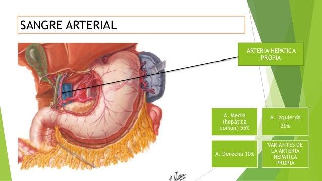 Anatomia de higado y via biliar UDC