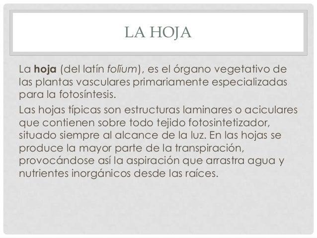 Anatomia de hoja