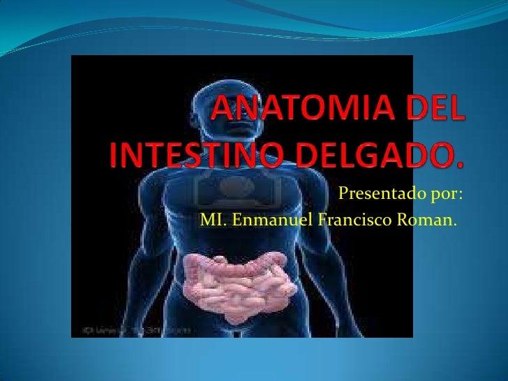 Anatomia de intestino delgado.