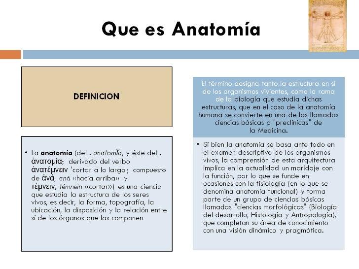 Excelente Anatomía Qué Es Lo Bandera - Anatomía de Las Imágenesdel ...