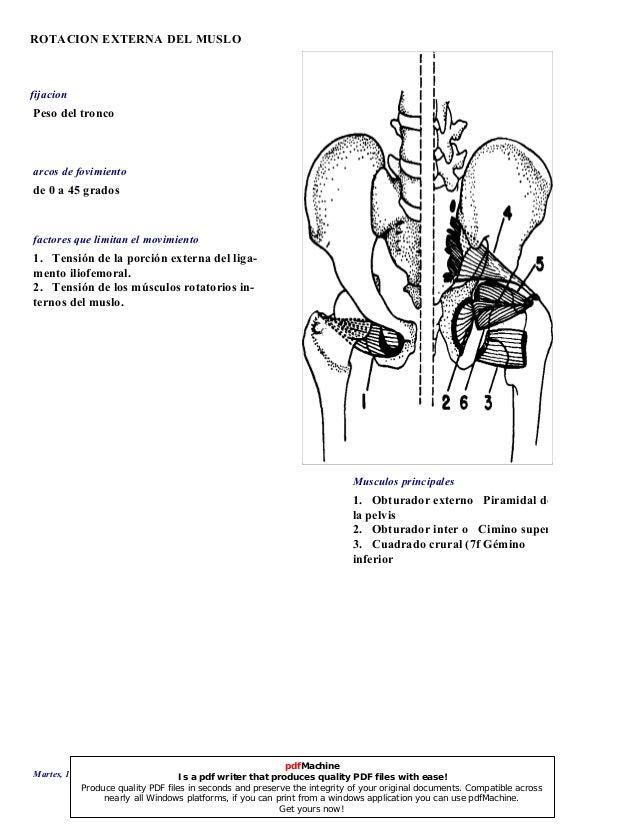 Anatomia de Kendall