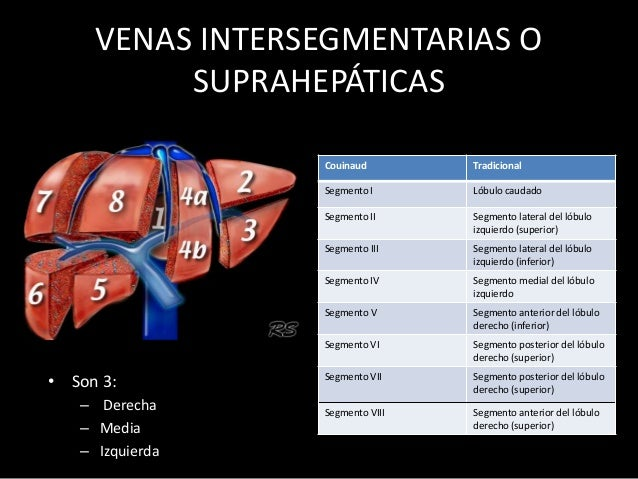 VENAS INTERSEGMENTARIAS O SUPRAHEPÁTICAS • Son 3: – Derecha – Media – Izquierda Couinaud Tradicional Segmento I Lóbulo cau...