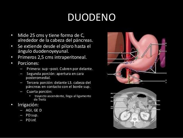VÁLVULA ÍLEOCECAL • El íleon distal desemboca en la zona medial y posterior del intestino grueso, en la unión del ciego co...