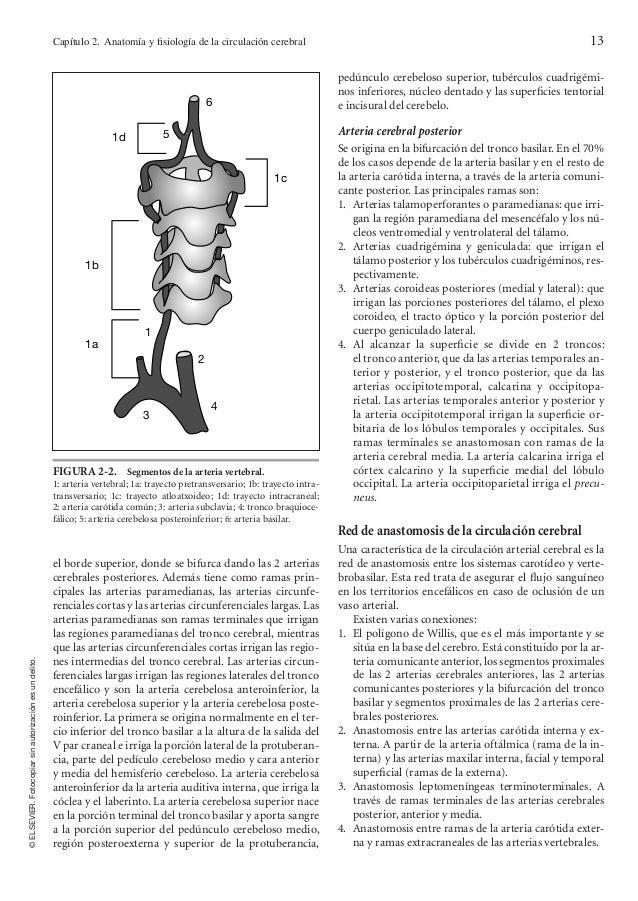 Anatomia de la funcion cerebral
