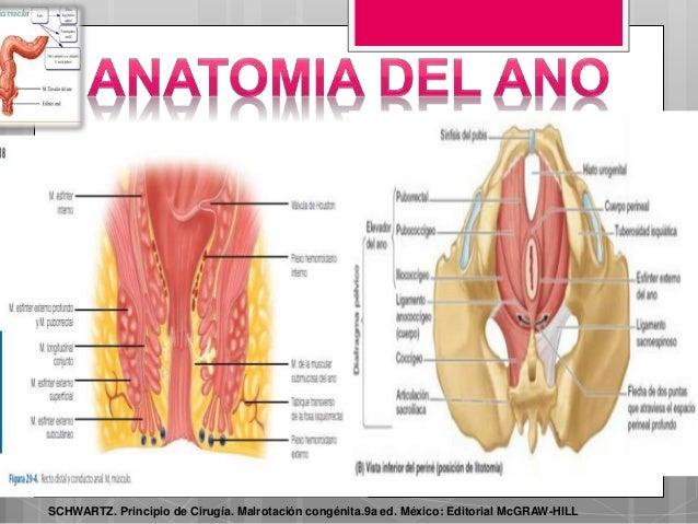 anatomia-del-ano-13-638.jpg?cb=1489642849