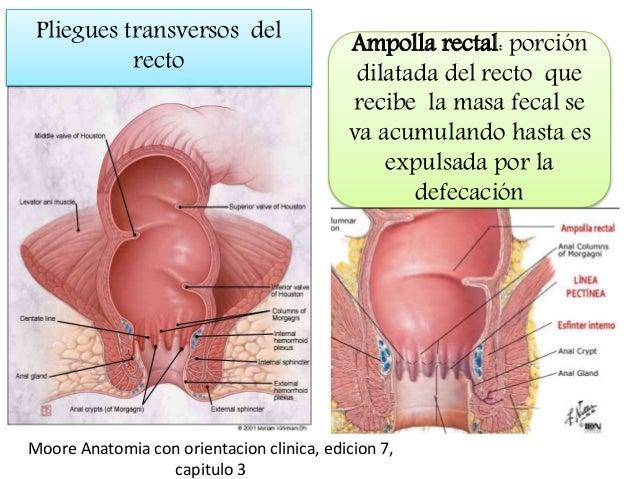 Anatomia del ano